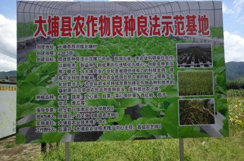 西河镇建设长寿蔬菜示范基地