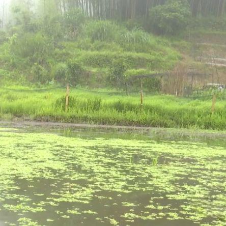 推动红萍绿肥项目 助力生态农业发展