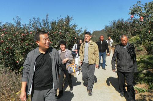 """专家来下营镇进行""""天津有机苹果生产技术推广与示范""""项目验收"""