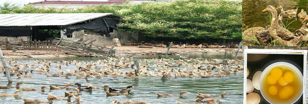 龙海紫泥镇生态农业园建成各种特色养殖及加工示范基地
