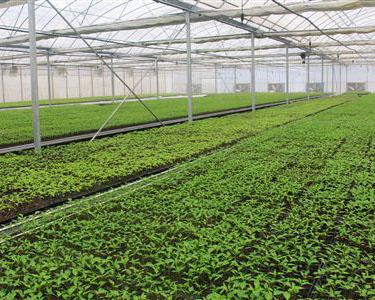 江津现代农业园区获评市级农业科技园区