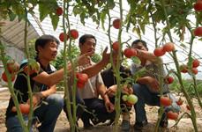 青光镇 加强蔬菜栽培技术培训助推农业增产农民增收