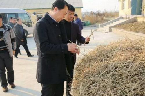 市委书记张静辉深入朝阳山镇调研农村工作