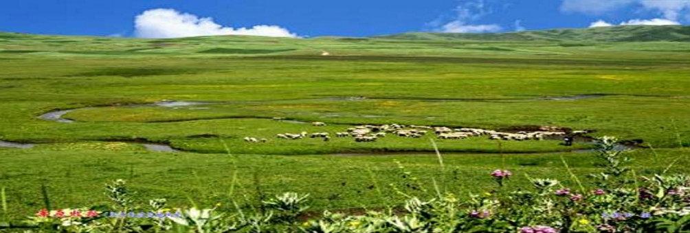 岷县狼渡湿地草原
