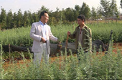 苗木移栽技术培训