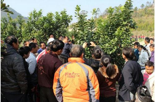 县残联举办农村残疾人实用技术蜜柚种植培训班
