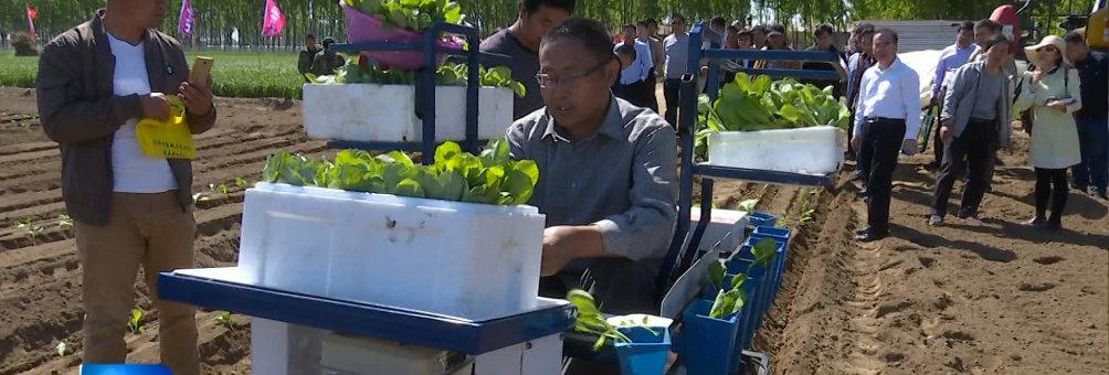 我区蔬菜机械化移栽技术受关注