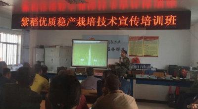 天堂紫米种植技术培训