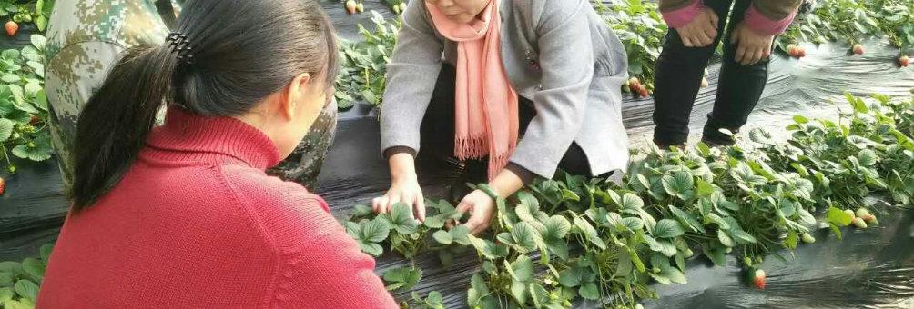 新型职业农民培养