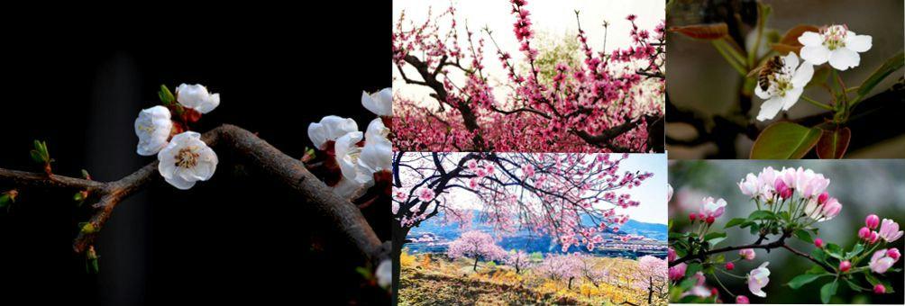 四季御果-花海礼泉