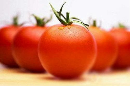 番茄主要病害及防治技术培训