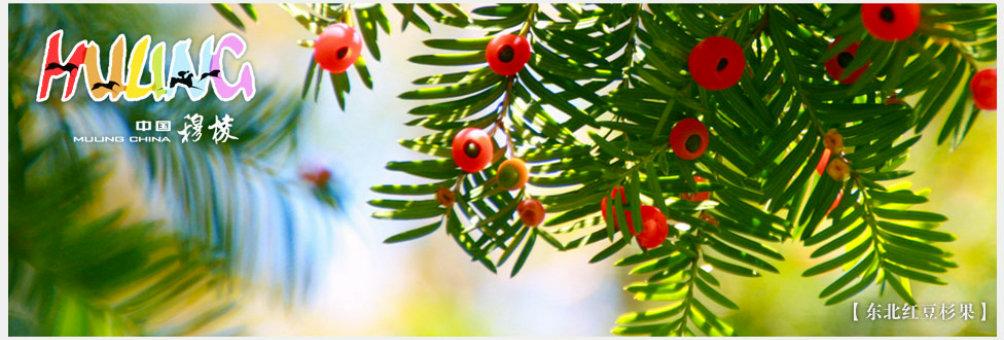 国家级东北红豆杉自然保护区