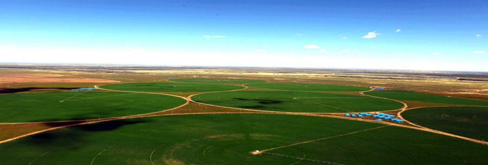牧草种植基地