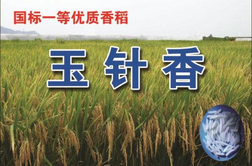早稻低镉种子推广项目介绍