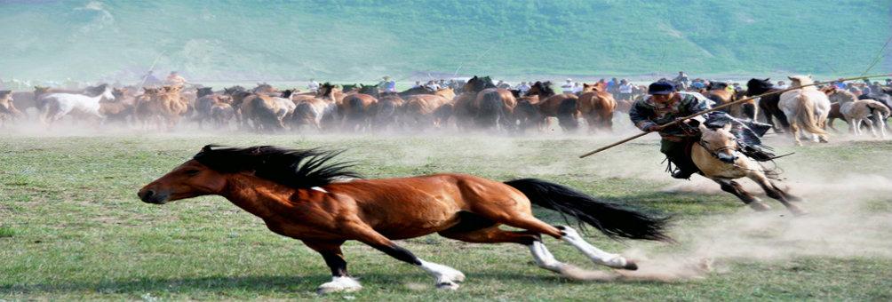 风土人情—套马