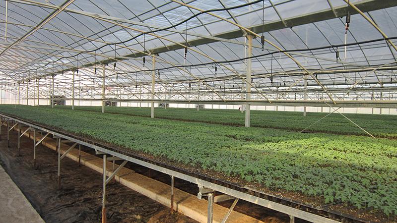 第八轮农业系列专业技术人员继续教育