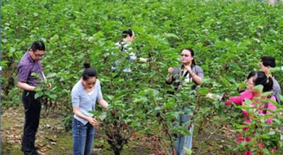 芳桥成校举办果桑种植户培训