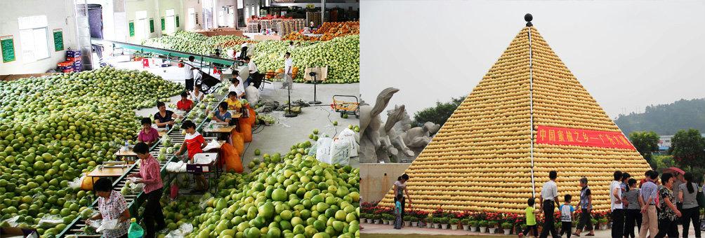 中国蜜柚之乡    广东大埔