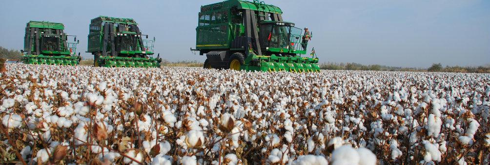 国家优质棉花生产基地