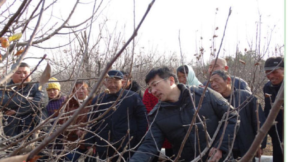太谷双东、惠安等地利用冬闲对农民进行果树修剪培训