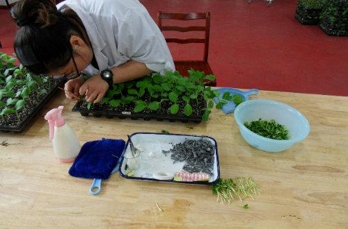 蔬菜嫁接培训