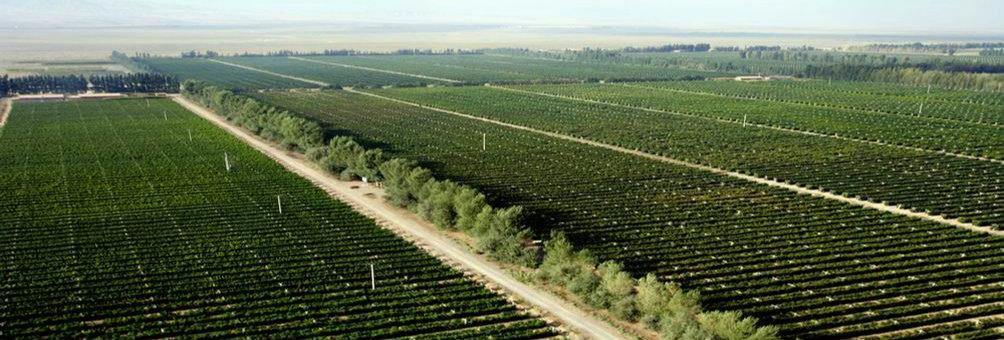 万亩葡萄庄园