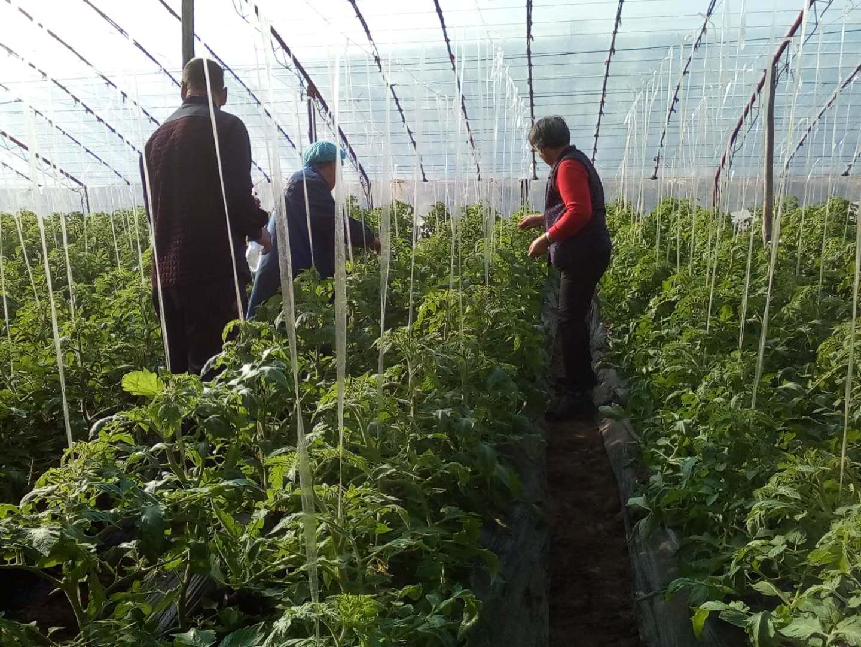 太谷县各地大力开展大棚种植培训