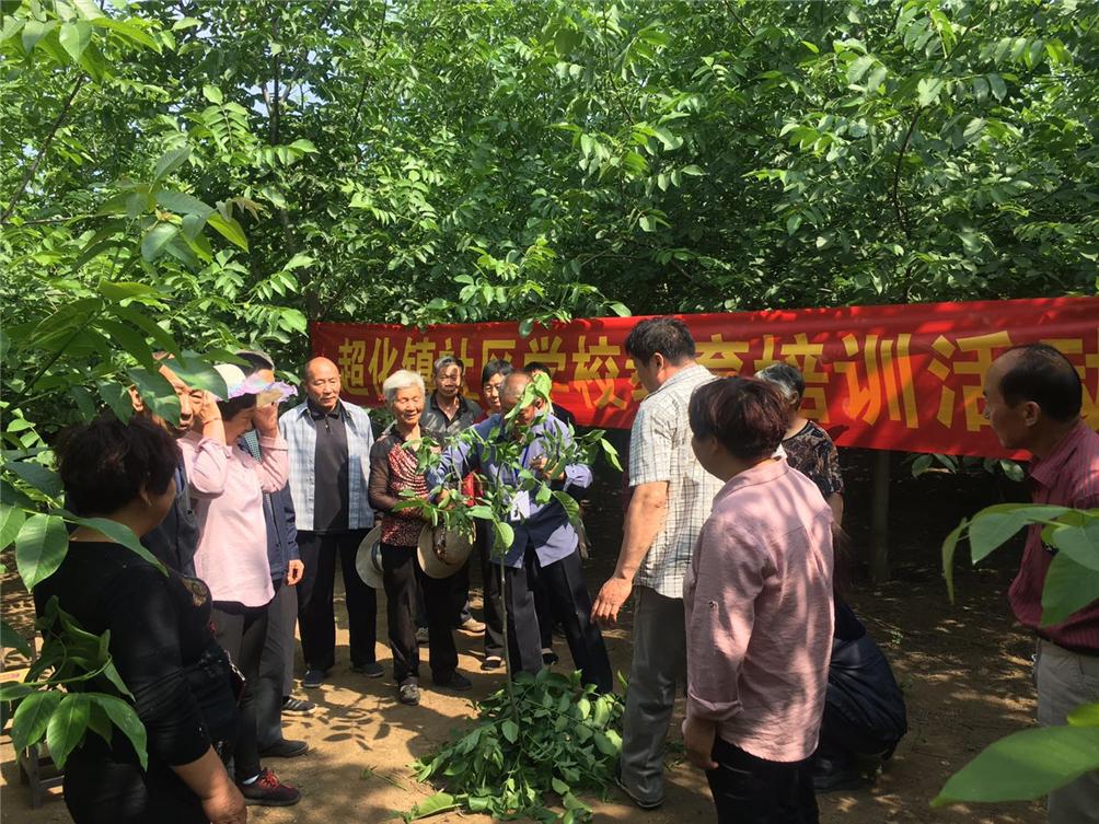 超化镇社区学校举行果树嫁接培训