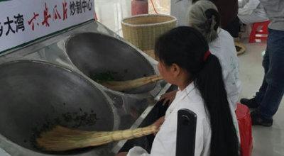 传承瓜片制作技术 实际培训制茶能手
