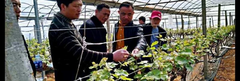 整合培训资源  创新培训方式 全力打造一支新型职业农民队伍