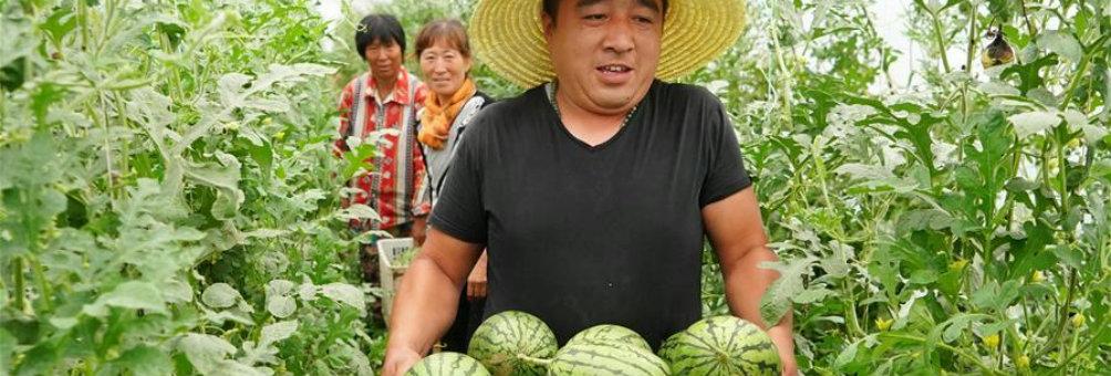 精品农业带动贫困户脱贫致富