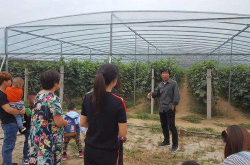 漕河镇成人学校开展大棚葡萄种植技术培训