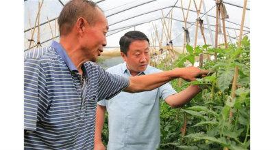 三门峡市陕州区:依靠产业培训带动 让脱贫致富的路越走越宽