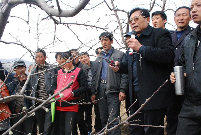 山地苹果栽培技术培训