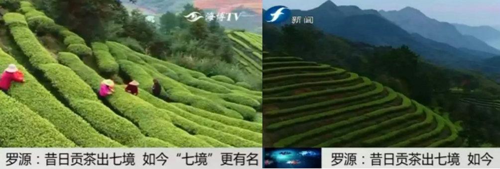 """昔日贡茶产七境 如今""""七境""""更出名"""
