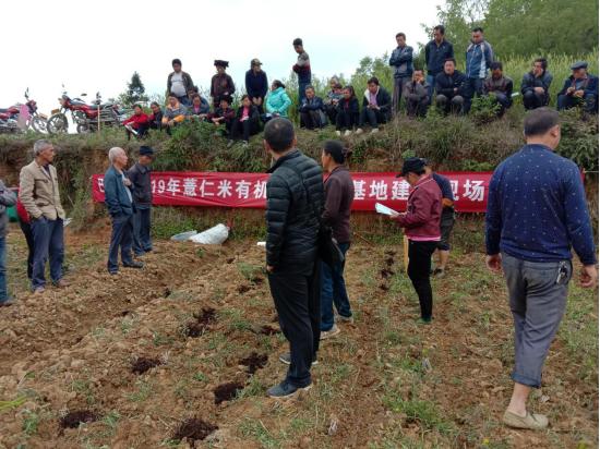 巴铃镇开展绿色有机薏仁米现场栽培技术培训