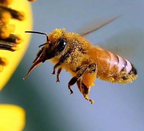 邢台县新型职业农民培育养蜂班赴北京中国农科院蜜蜂研究所暨天宝康成熟蜜生产基地参观学习