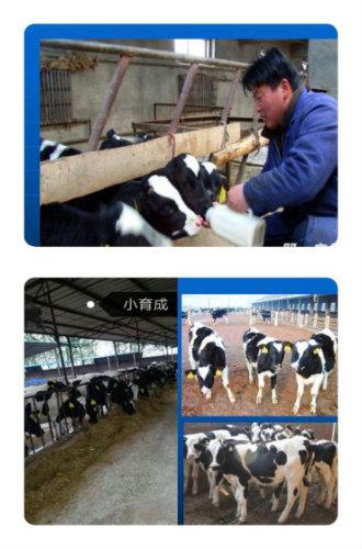 徐水区大因镇举行奶牛养殖扶贫培训