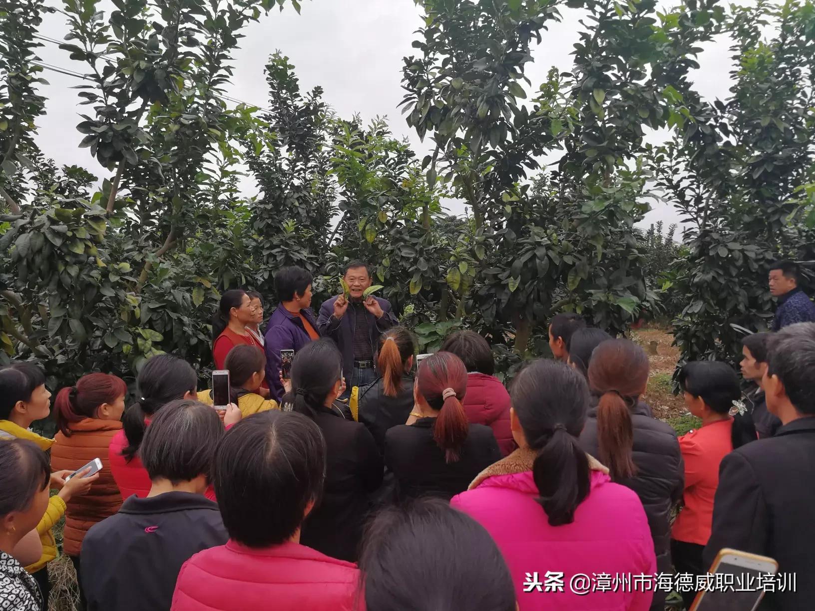 2018年平和县安厚镇美峰村新型职业农民(蜜柚生产经营管理)培训班 顺利结业