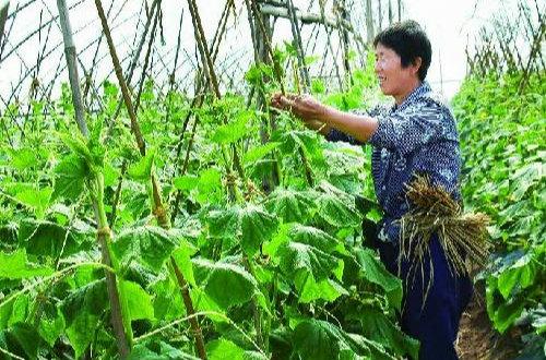 大店镇融合兴农公司和专业合作社资源提升农业服务水平