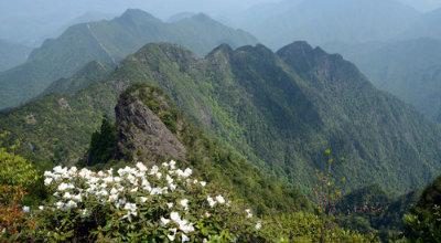 九龙山国家级自然保护区