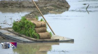 金坛区稻田养虾面积增加到810亩