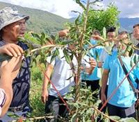 盈江县盏西镇开展澳洲坚果栽培技术培训
